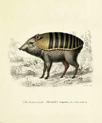moooi carpets armoured boar