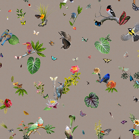 Moooi Carpets Bird